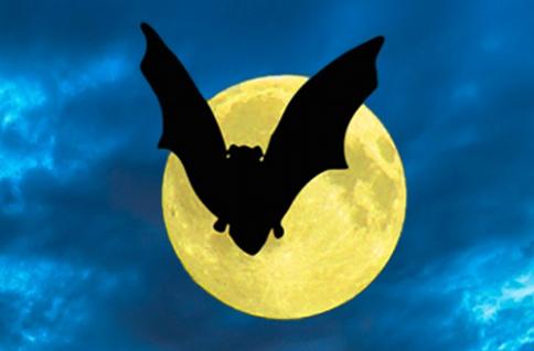 Vleermuizen in het torenfort